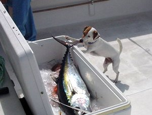 Stray Dog Fishing Charters